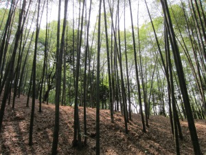 We didn't mean to end up here, but lovely bamboo park all the same