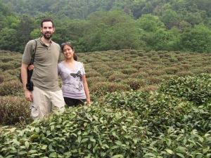 Tea plantation just outside Hangzhou