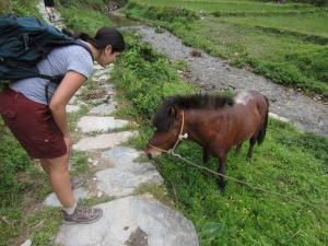Mini pony!