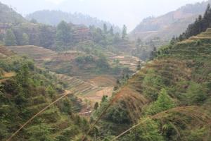 Mountain rice terraces