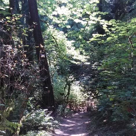 Oregon Tryon Creek